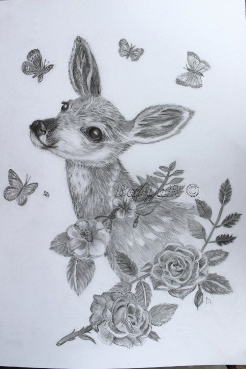 Line Drawings Of Animals Deer : Realistic baby animal sketches