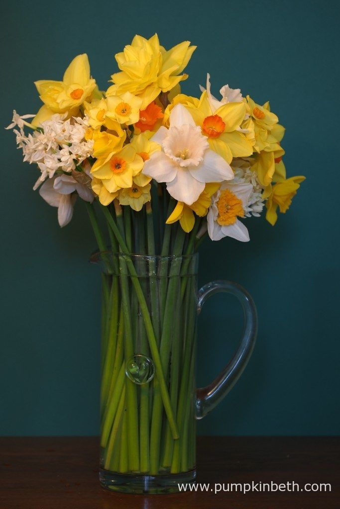Beautiful daffodils from Fentongollan, in Cornwall.