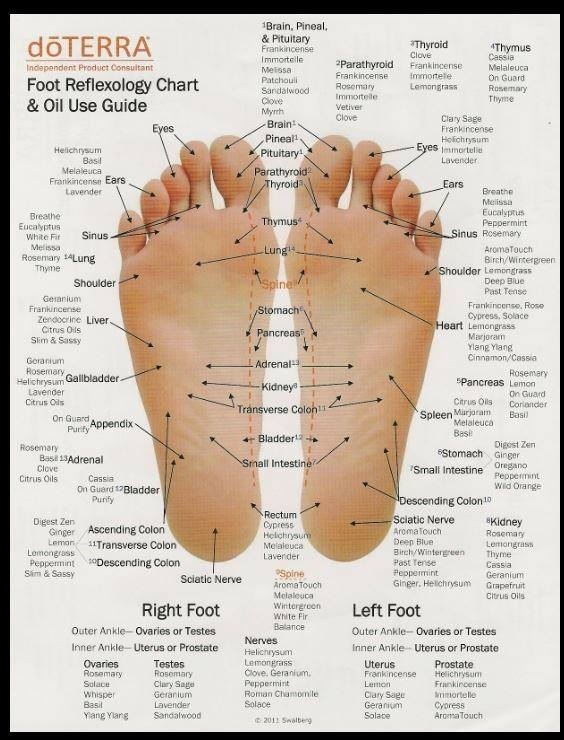 Foot reflexology guide. Use pure essential oils to enhance the experience and promote healing.