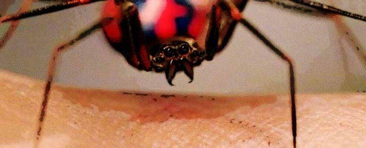 ¿Cómo reconocer una picadura de araña?  https://www.infotopo.com/salud/prevencion-medicina/como-reconocer-una-picadura-de-arana