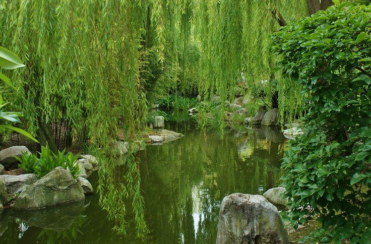 Китайский Сад Дружбы. Сидней, Австралия. Обсуждение на LiveInternet - Российский Сервис Онлайн-Дневников