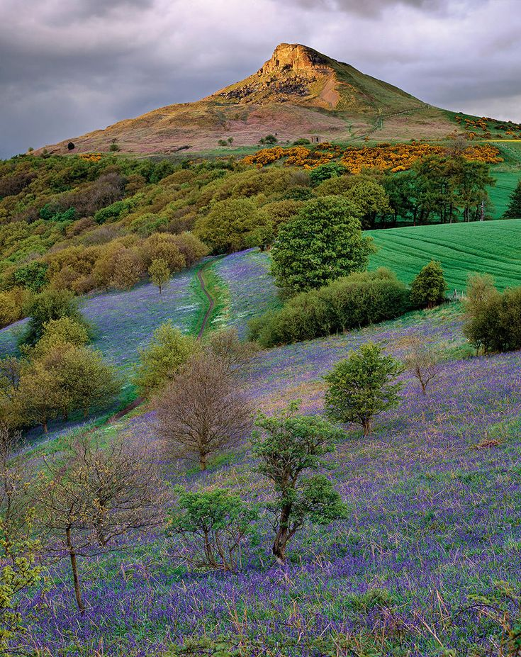 Roseberry bluebells, North Yorkshire