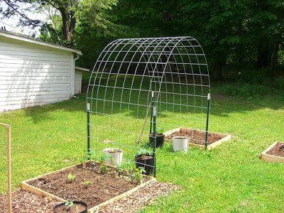 For grape vines, melons, beans, cucumbers, and flowers.  So easy - 4 t posts, 1 cattle panel from a local farm store - all under $30.00