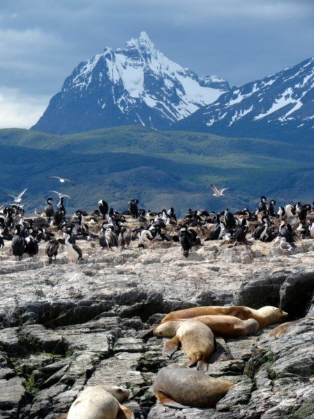 Tierra del Fuego!  Really I just want to see the penguins..and have an excuse to see the rest of Argentina.