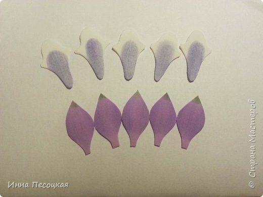 На глаза  мне попался необычный  цветок. Называется «Аквилегия», простонародное название  - «Водосбор». Форма интересная, расцветки  разнообразные. Сорвала цветочек, разобрала на «запчасти» соцветие, обвела на бумаге и получила шаблоны в натуральную величину. Собрала. Вот что получилось… фото 4