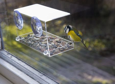 bird feeding station for your window