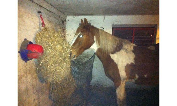 Lav dit eget hønet - DIY haynet from my blog