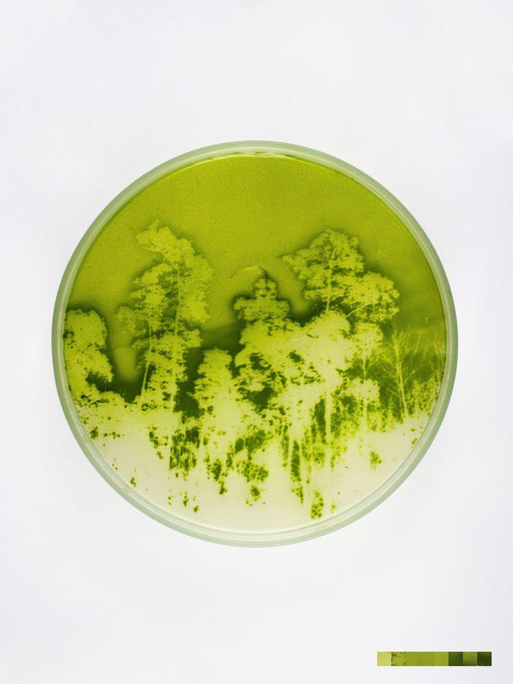 Lia Giraud - Algae Graphs