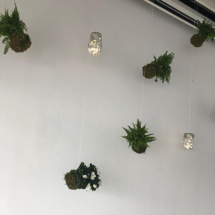 Falakon Is Zold Cserepes Novenyek Logtak Plants