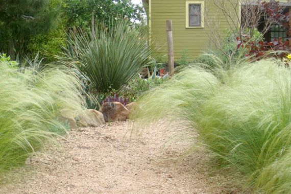 15 best front yard images on pinterest for Ornamental grasses for front yard
