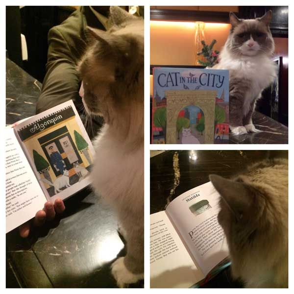 Matilda the @algonquin resident cat reads her story! #SpaCat rule: know your history