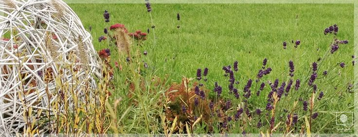 ogród w Głudnej