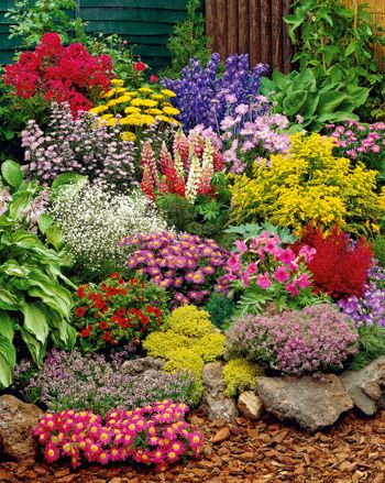 a mixture of beautiful perennials