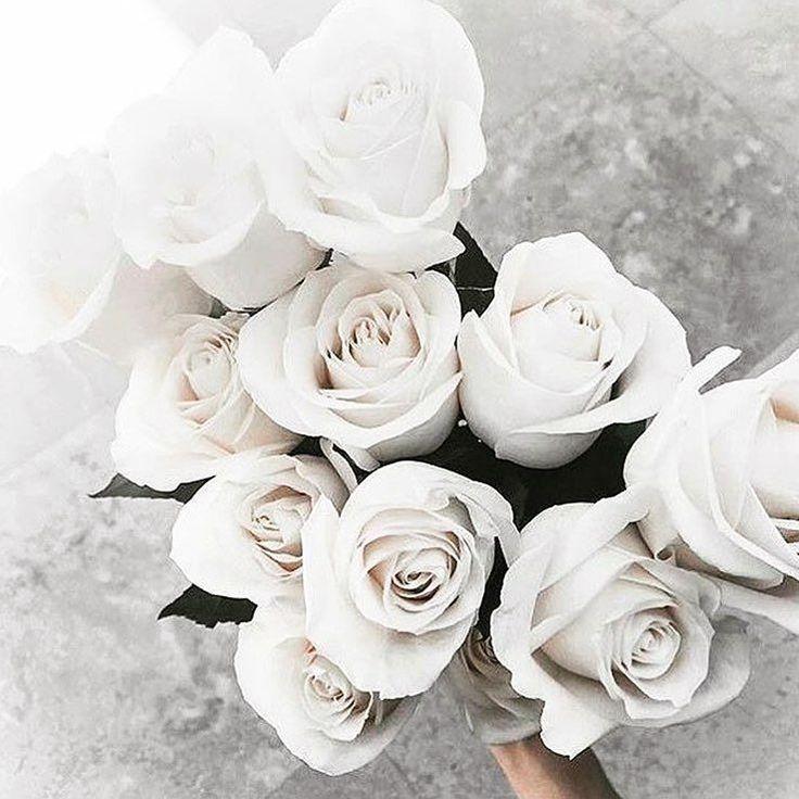 73 best CVK. x Flowers images on Pinterest | Beautiful flowers ...