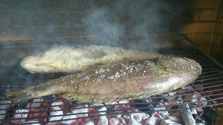 Big Fishes