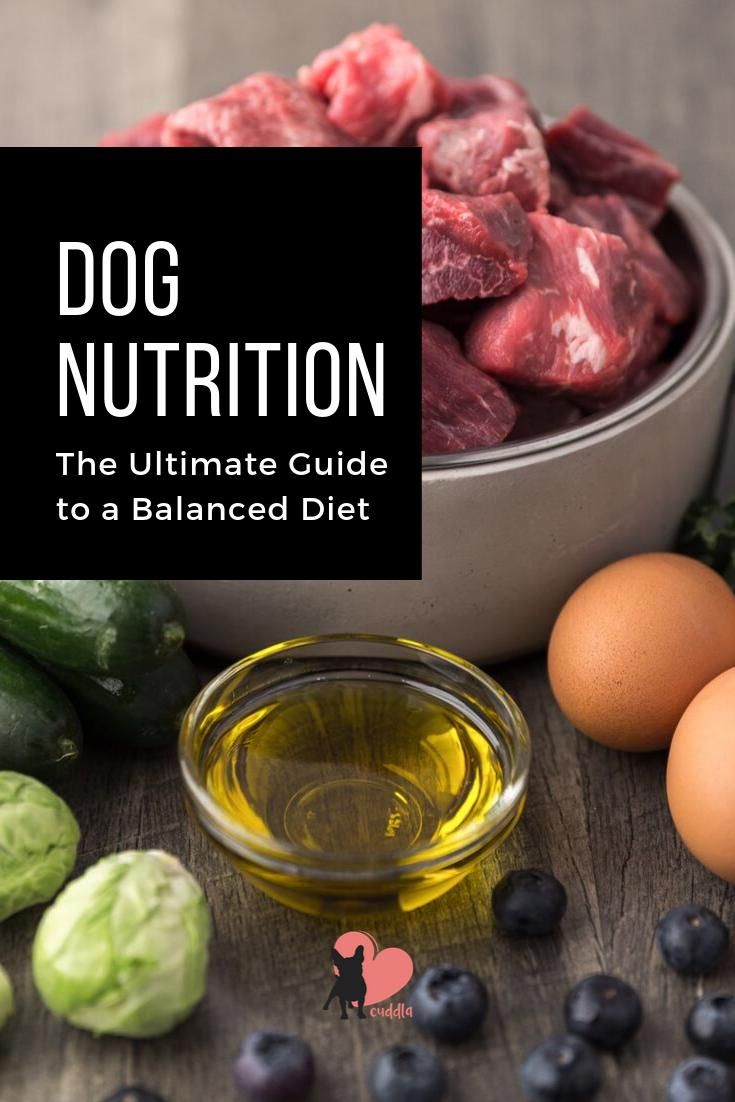 Dog Nutrition The Ultimate Guide To A Balanced Diet Dognutrition
