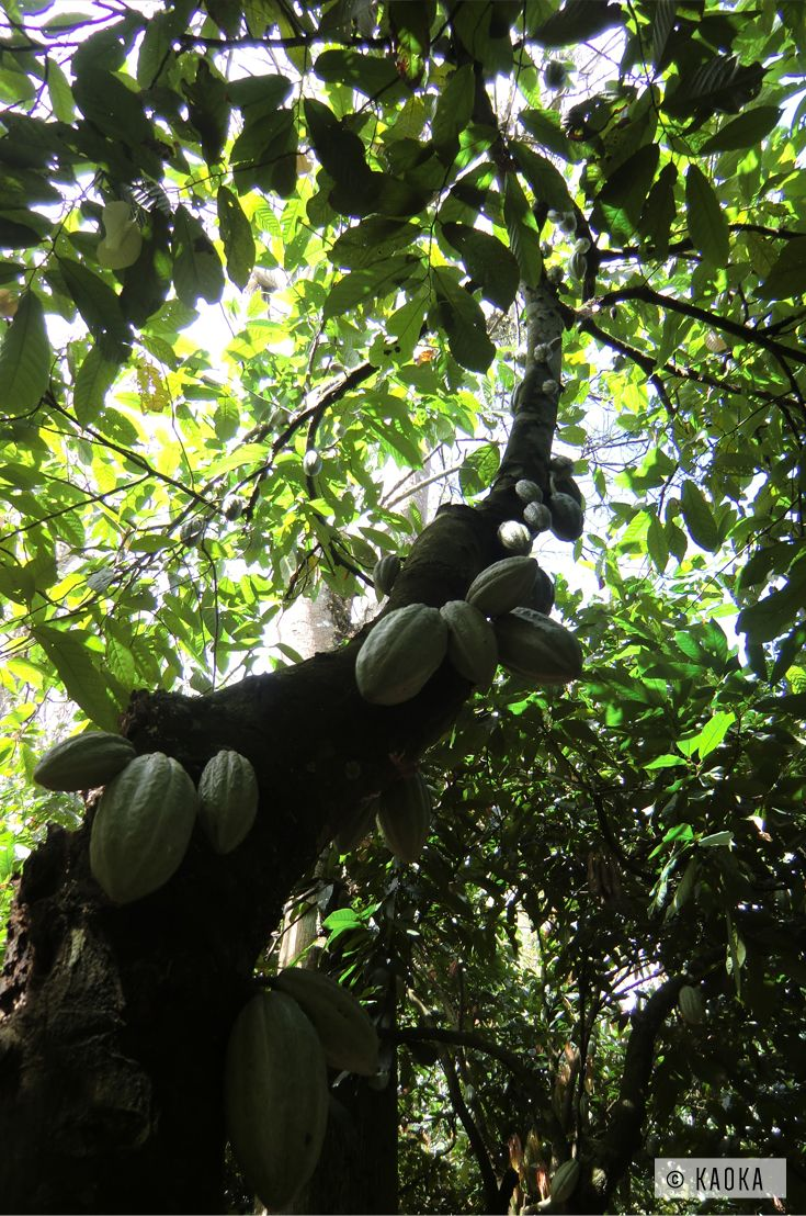 8 best kaoka cacao de st domingue images on pinterest dominican republic chocolates and cocoa. Black Bedroom Furniture Sets. Home Design Ideas