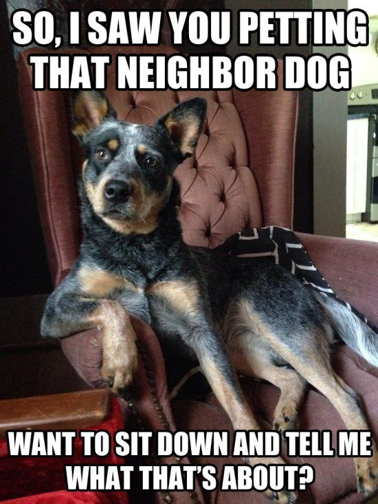 blue heeler-- these dogs watch your every move and like to mimic what you do! It's too funny