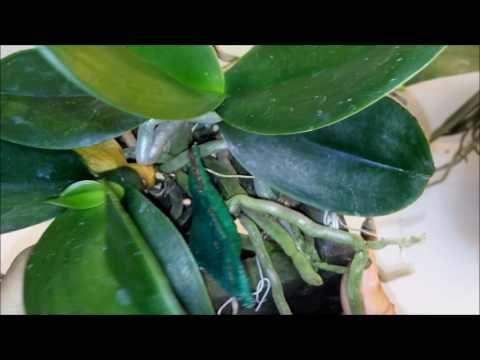 Quando Separar o Keike da Orquídea? É Preciso? Em que momento? - YouTube