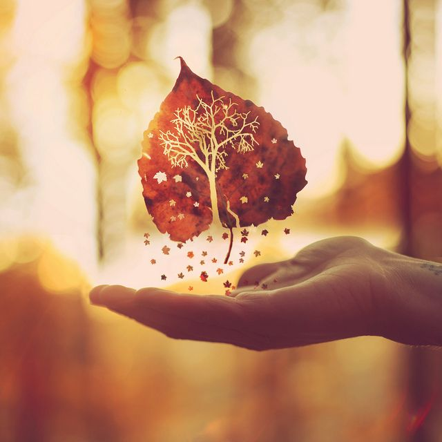 """Autumn is a second spring when every leaf is a flower."" --Camus; photo by Boy_Wonder (Joel Robison) on Flickr"