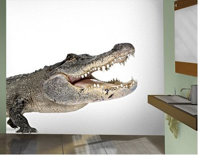 Lachendes Krokodil 288x270cm