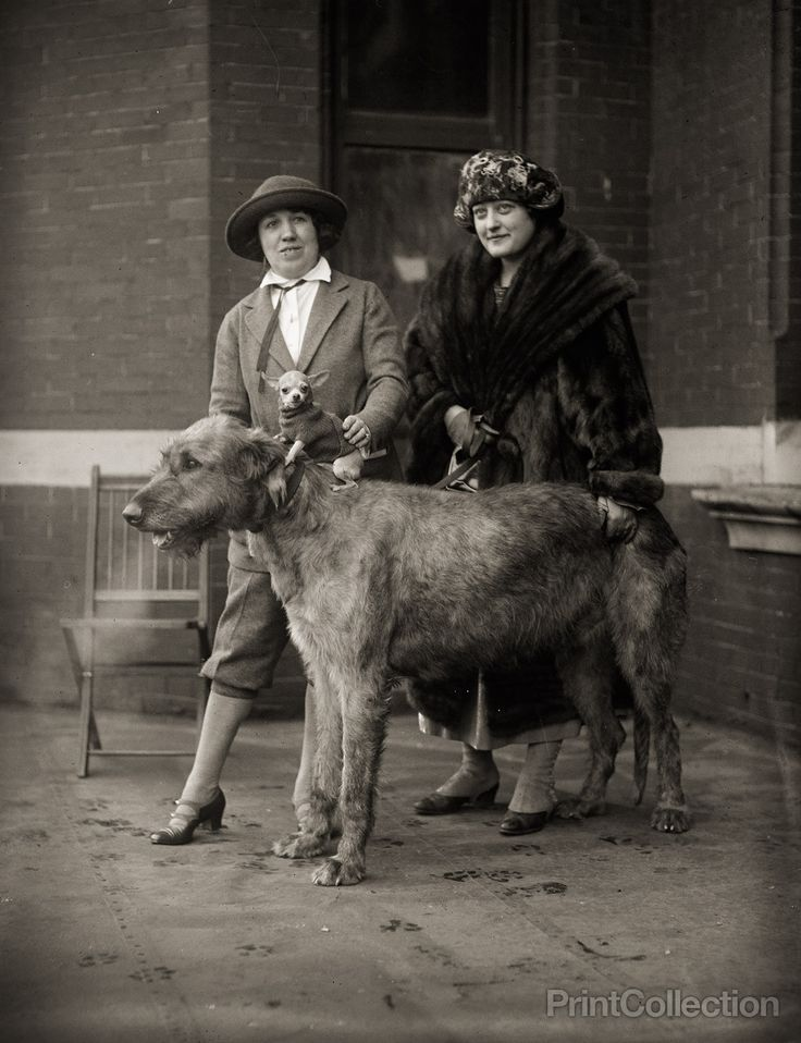 Dog show, photographed by the National Photo Company in 1923 on 4x5 glass plate negative.