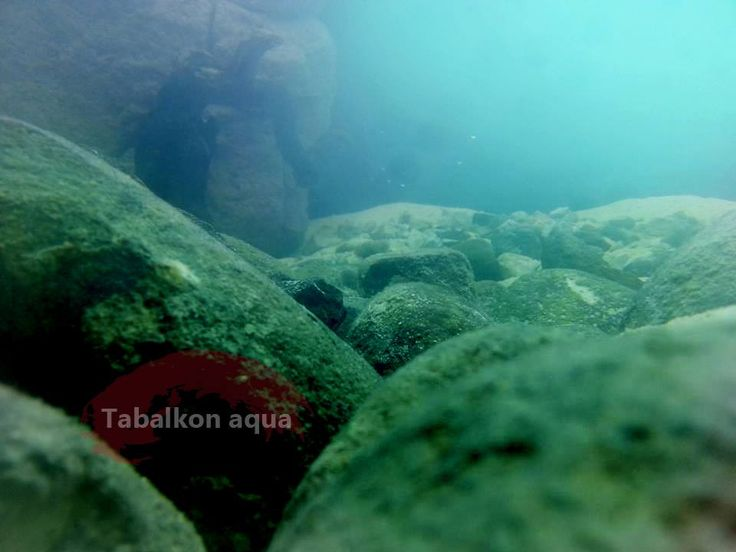 aquarium, biotope, tank, fish, malavi, akvaryum, biyotope, dizayn, yosun, demasoni, malawi lake,Aquascaping