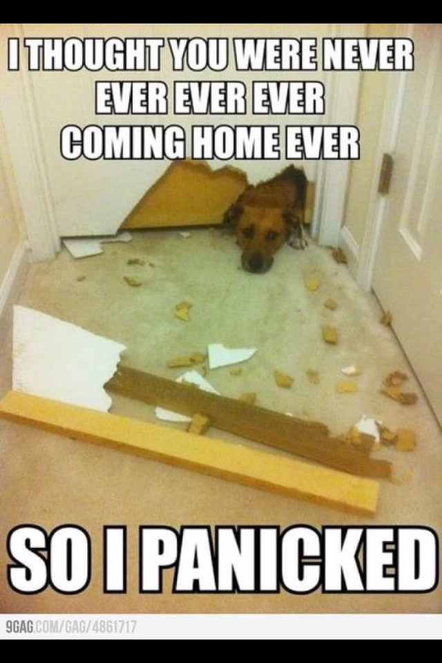 Funny Dogs Without Words 894 best Funny ...
