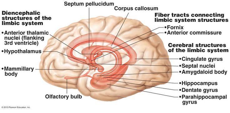 20 best The Central Nervous System images on Pinterest | Central ...