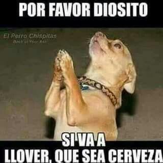 8cf4bbdefef2cbdf1856e875c8d38a7c_memes-chistosos-de-borrachos-memes-borrachos-para-facebook_320-320.jpeg (320×320)