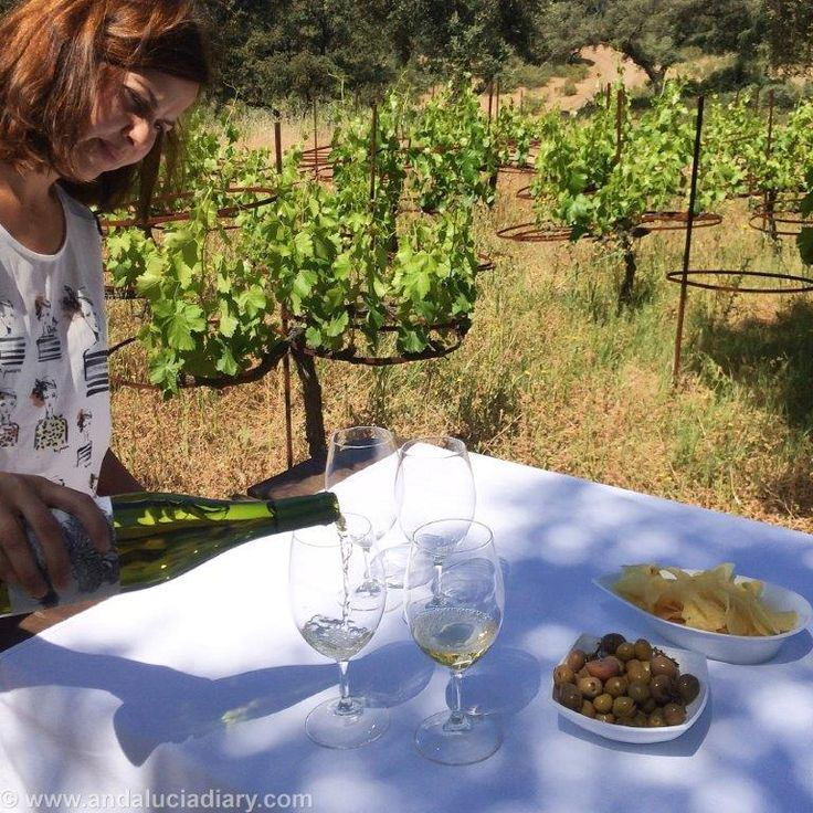 Wine tasting at a Melonera Ronda Winery wine, bodega www.Andalucia.Diary.Com #luxestyletravel #luxurytravelpursuits