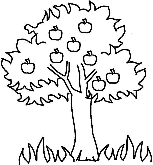 Apple Tree Apple Tree And Grass Coloring Page Boyama