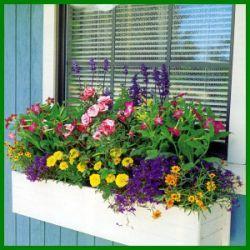 Bunter sommerlicher Blumenkasten in Regenbogenfarben.  Bunter sommerlicher Blumenkasten bepflanzt in Regenbogenfarben belebt jede Fensterbank und bringt Sommerstimmung auch an trüben Tagen  http://www.gartenschlumpf.de/bunter-sommerlicher-blumenkasten/