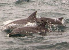 今日も元気いっぱいのイルカ達 親子で仲良く泳ぐ姿は癒したっぷりです()  夏休みのご予定がまだな方 熊本県天草に来てイルカウォッチングはいかがでしょうか  #天草 #イルカウォッチング #イルカマリンワールド #イルカ #dolphin tags[熊本県]