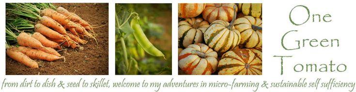 Preserving Corn: Part 2 Corn Cob Jelly | One Green Tomato