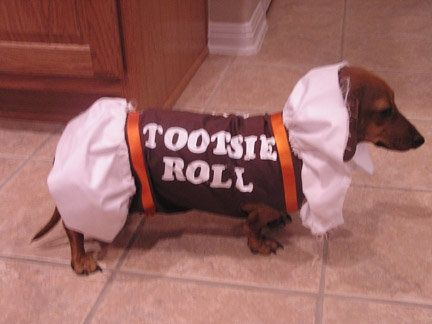 Tootsie Roll Dog Costume. OMG I want to do this to my niece Mona!