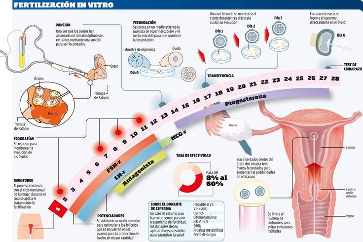 Realizan reproducción asistida e inseminación artificial en Cancún