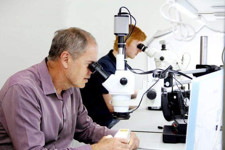 Probelogic international medical lab Perth