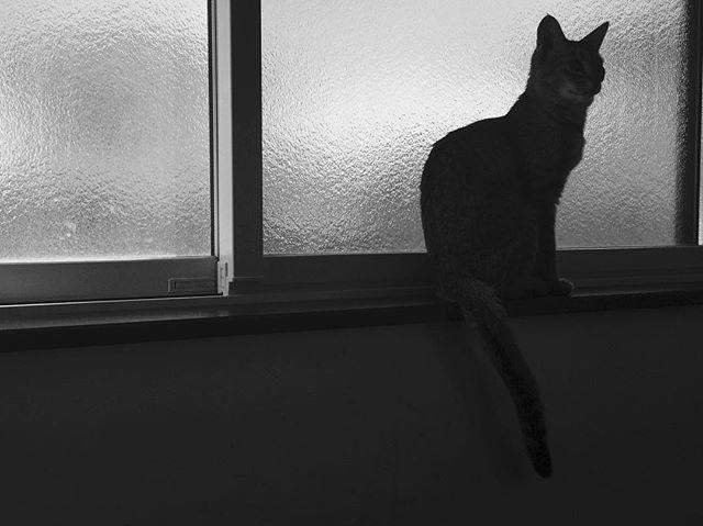 #にゃんこ#にゃんすたぐらむ #にゃんだふるらいふ #モノクロ#モノクローム#blackandwhite #白黒写真#写真#cat#catsofinstagram #猫#猫のいる暮らし #元野良猫#元保護猫#キジトラ#愛猫#大好き#thankyou