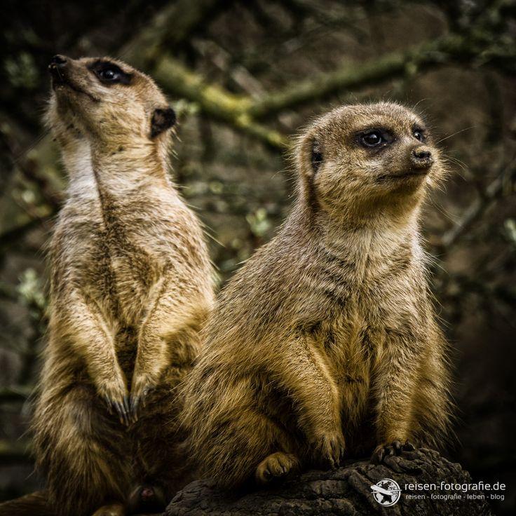 Workshop Tierfotografie von Pavel Kaplun im Zoom