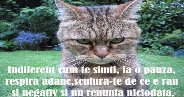 """ De renuntat poti sa renunti oricand, de ce sa renunti tocmai acum?"" #nurenunta"