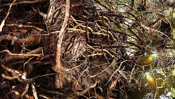 Bellmore: Roots by Merri Randell at Brenda May Gallery