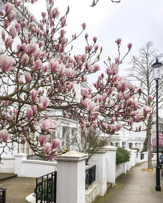 Notting Hill, London - Vicki Archer //  https://www.instagram.com/vickiarcher/