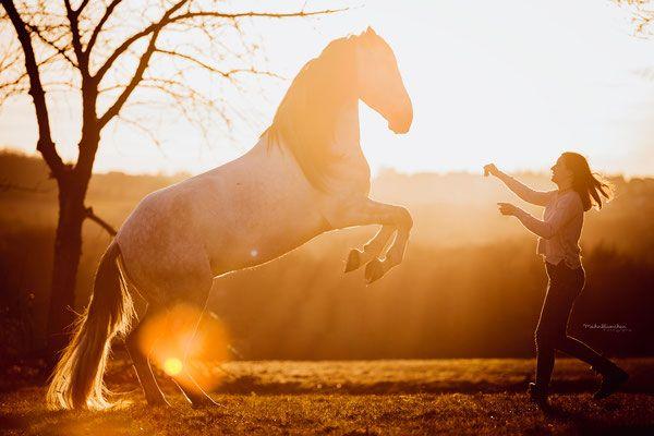 steigendes Pferd, Pferdeshooting, Zirkuslektionen, Spanier, im Sonnenuntergang