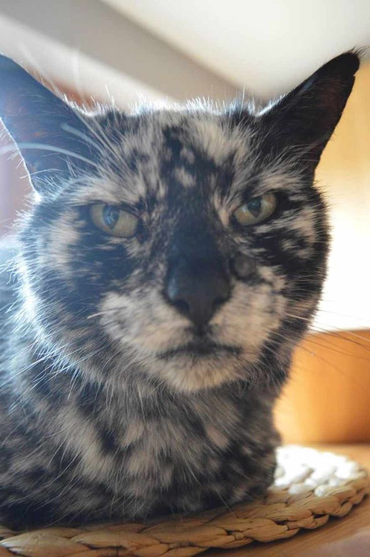 Best The Most Freckled Cat In The World Images On Pinterest - Meet scrappy 19 year old black cat grew unique marble fur due rare skin condition