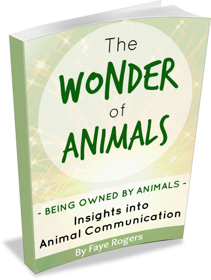 Download this FREE eBook which gives an insight into the world of Animal Communication by International Animal Communicator Faye Rogers.