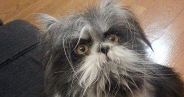 Αυτό το ζώο έχει διχάσει το διαδίκτυο. Είναι σκύλος ή γάτα;