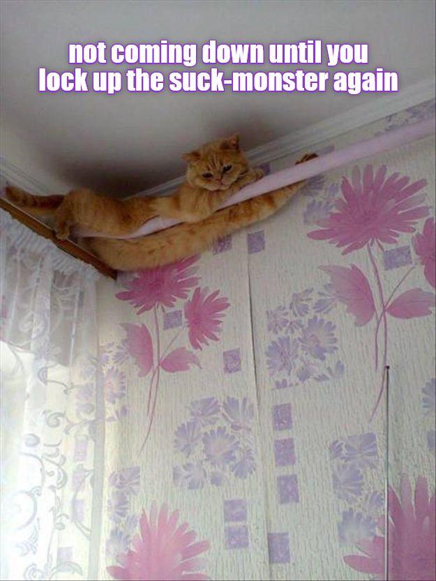 I'm safe up here http://cheezburger.com/9021619456