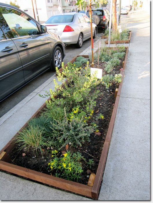 Argonne School transforms grey to green with a new sidewalk garden | Richmond SF Blog