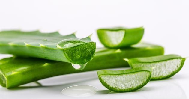 Aloe Vera Faydaları Özellikle doğal ürünleri kullanmak isteyenlerin tercih edebileceği ürün seçenekleri arasında yer alan aleo vera faydaları saymakla bitmez. Cildi tedavi eder En sık kullanıldığı alanlar arasında özellikle cilt bakımı yer almaktadır. Yaraların etrafında Kan dolaşımını hızlandırarak iyileşme sürecinin daha kısa süre sürmesine yardımcı olur. Aynı zamanda cildin UV ışınlarına karşı korunmasını sağlar. Güneşe …
